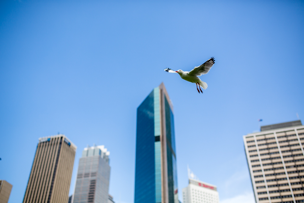 Sydney Travel Photos (22 of 24)