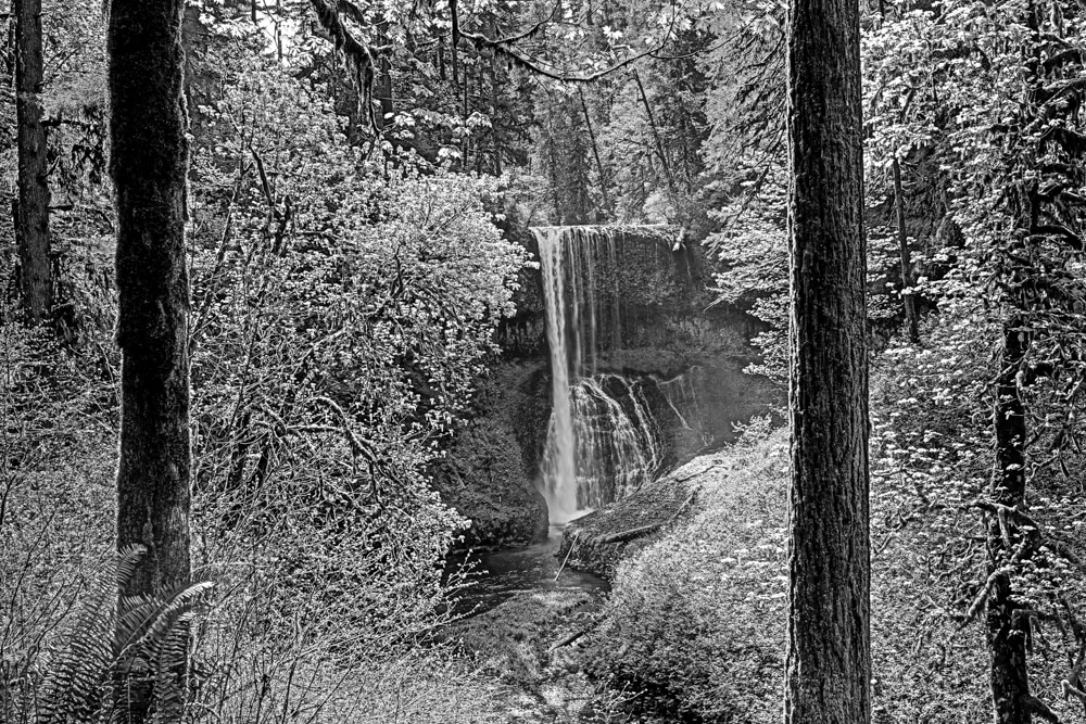 Silver Falls State Park OR 0112