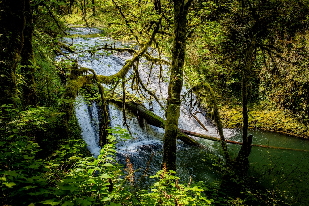 Silver Falls State Park OR 0117