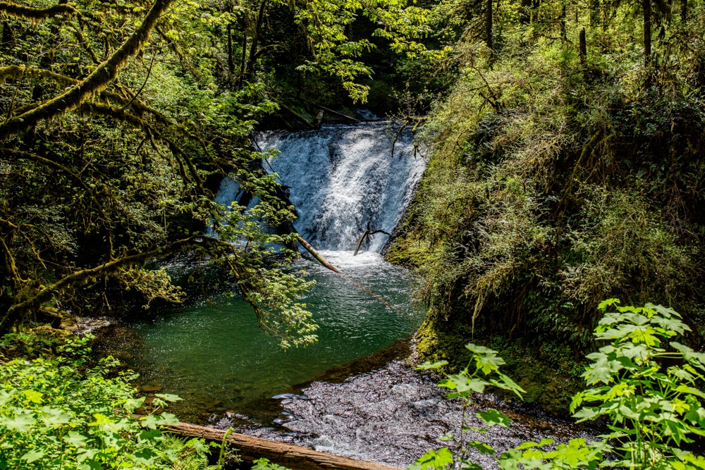 Silver Falls State Park OR 0120