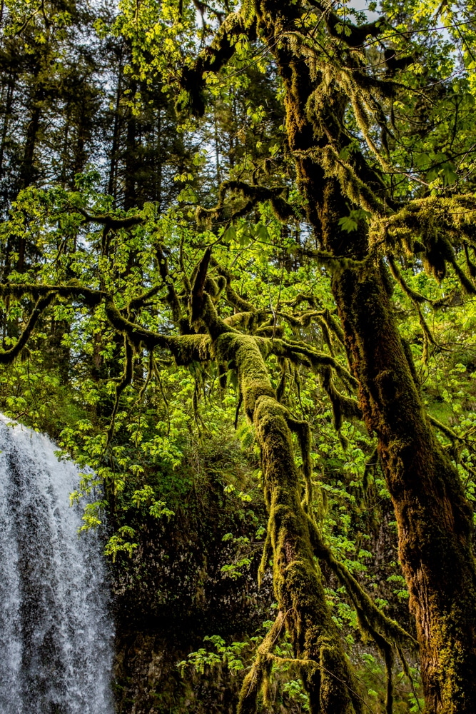 Silver Falls State Park OR 0121