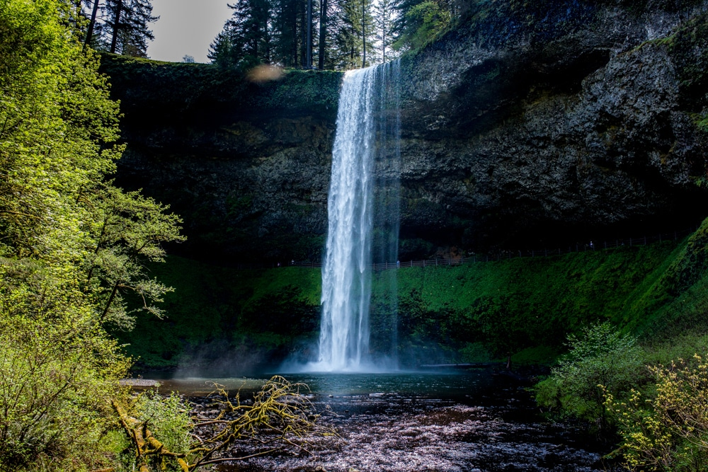 Silver Falls State Park OR 0128
